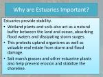 why are estuaries important3