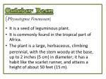calabar bean physostigma venenosum