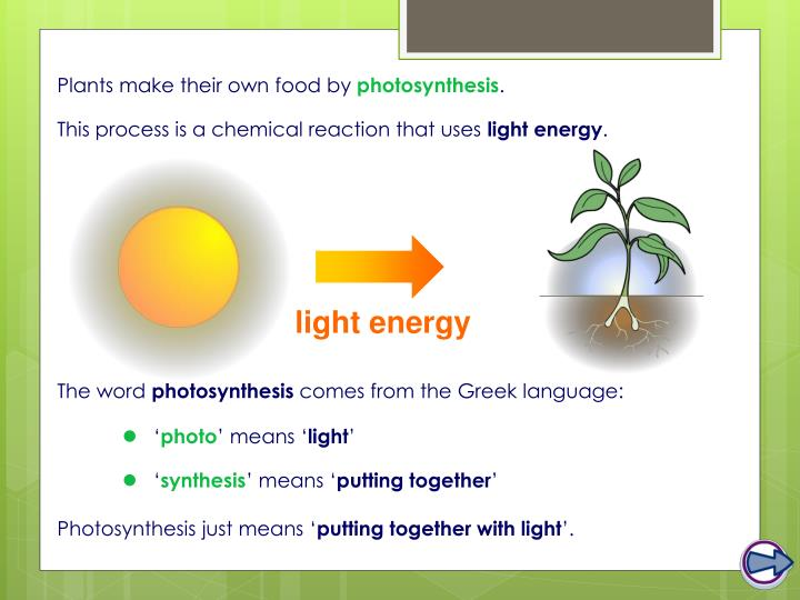 Plants make their own food by