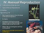iv asexual reproduction3