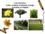 las plantas la flor el rbol el arbusto la hoja la huerta el c sped
