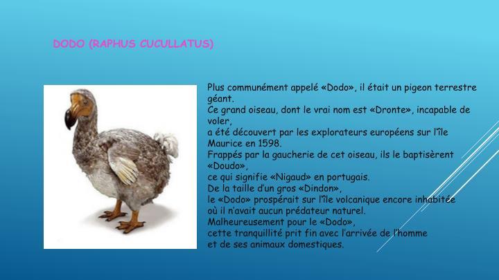 Dodo (