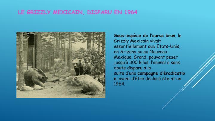 Le Grizzly Mexicain, disparu en 1964