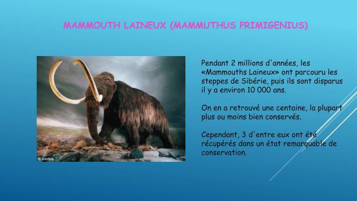 Mammouth laineux mammuthus primigenius