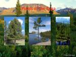 plants of the taiga