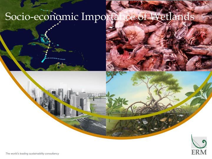 socio economic importance of wetlands n.