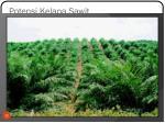 potensi kelapa sawit