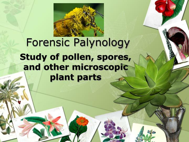 forensic palynology n.