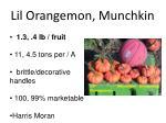lil orangemon munchkin