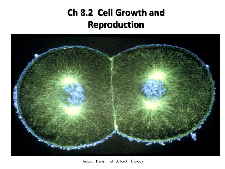 ch 8 2 cell growth and reproduction n.