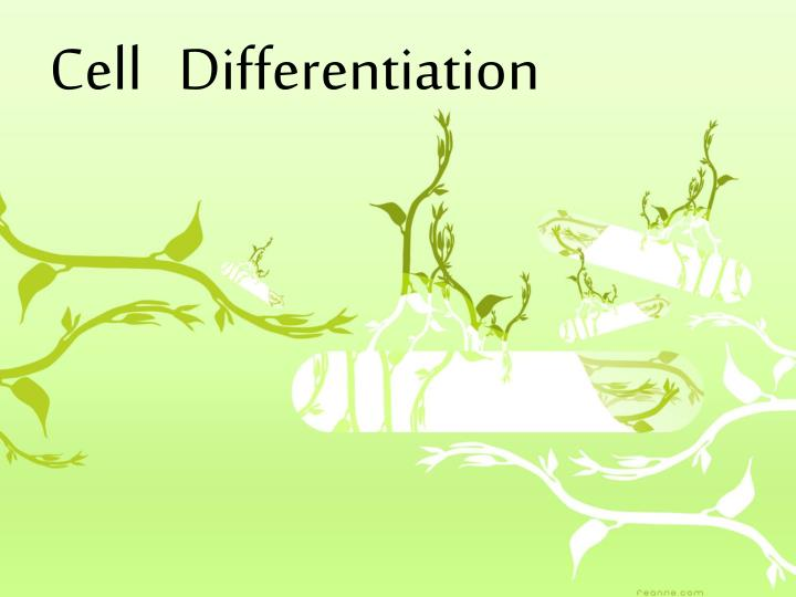 cell differentiation n.