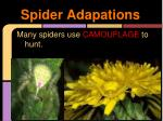 spider adapations
