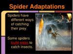 spider adaptations