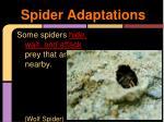 spider adaptations1