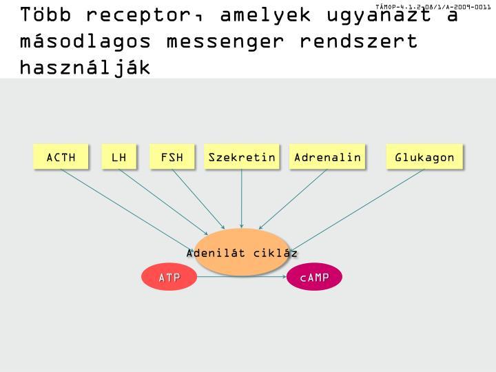 Több receptor, amelyek ugyanazt a másodlagos