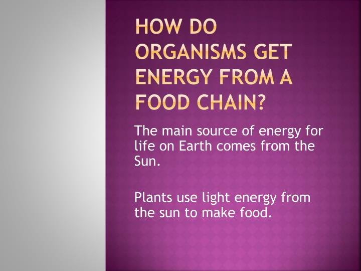how do organisms get energy from a food chain n.