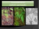 toxicodendron zehirli sarma k
