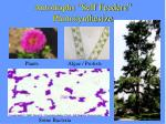 autotrophs self feeders photosynthesize