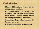 curiosidades4