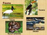 fauna3