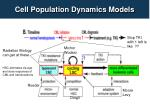 cell population dynamics models
