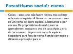 parasitismo social cucos