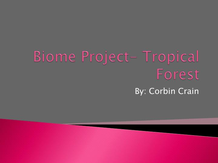 biome project tropical forest n.