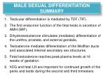 male sexual differentiation summary
