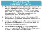 male sexual differentiation