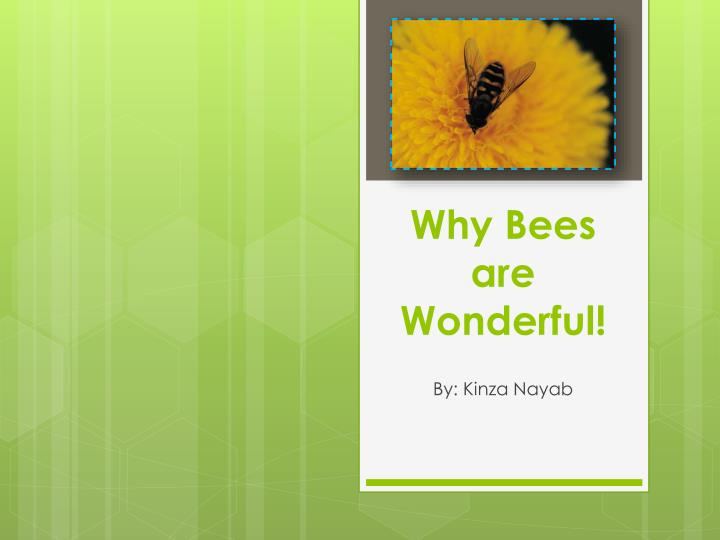 why bees are wonderful n.