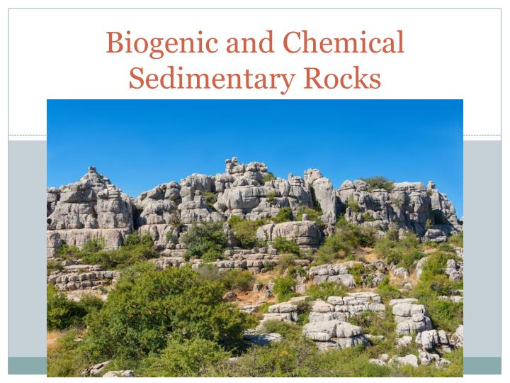 biogenic and chemical sedimentary rocks n.