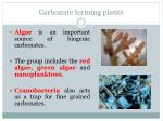 carbonate forming plants