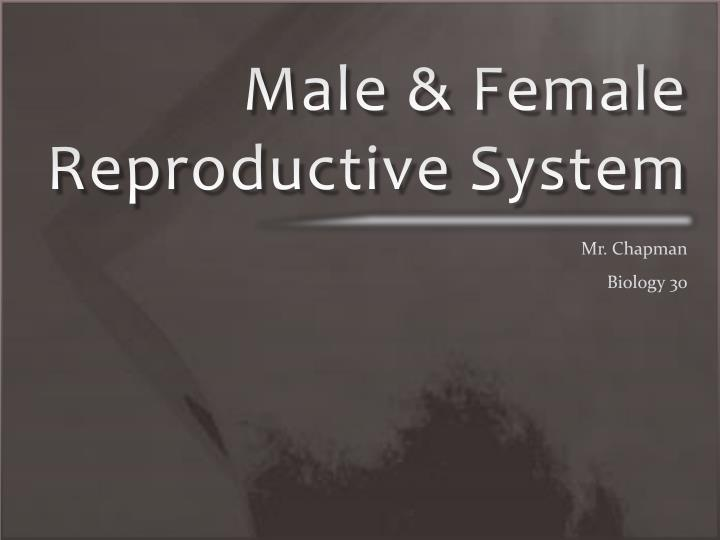 male female reproductive system n.
