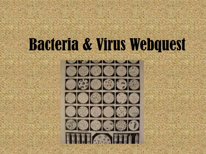 PPT - Bacteria & Virus Webquest PowerPoint Presentation ...