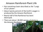 amazon rainforest plant life