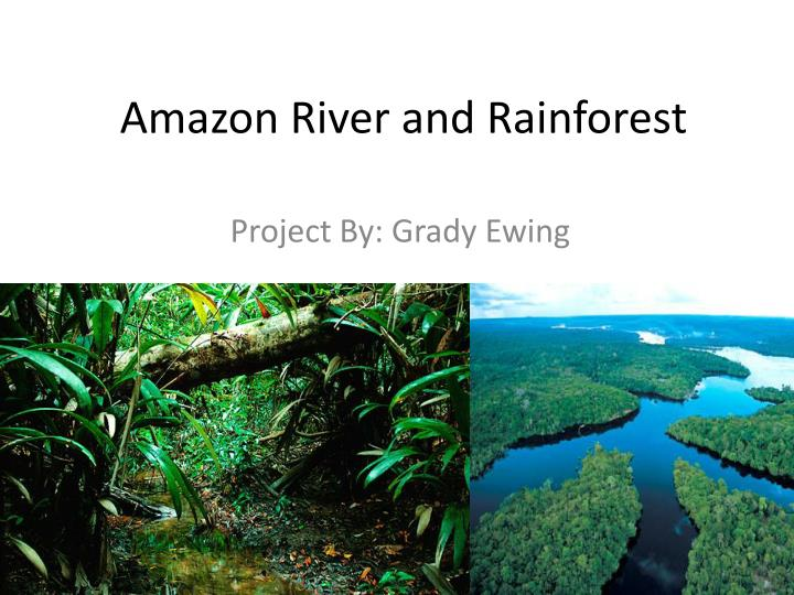 amazon river and rainforest n.
