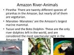 amazon river animals