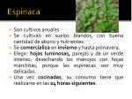 espinaca1