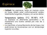 espinaca2