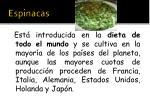 espinacas1