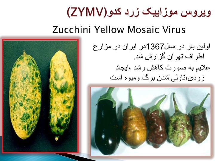 ویروس موزاییک زرد کدو