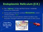 endoplasmic reticulum e r