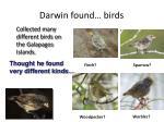 darwin found birds