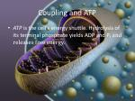 coupling and atp