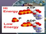 coupling and atp1