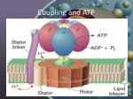 coupling and atp7