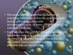 enzyme action2