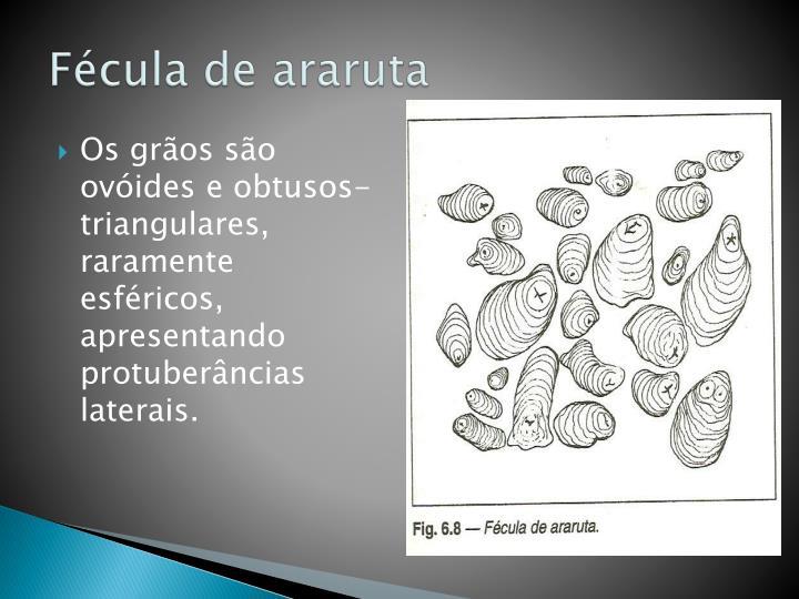 Fécula de araruta