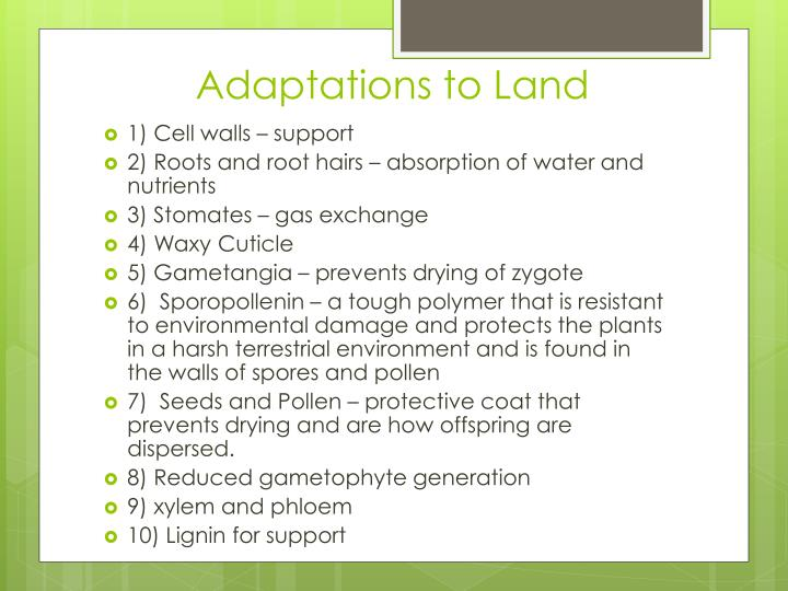 Adaptations to Land