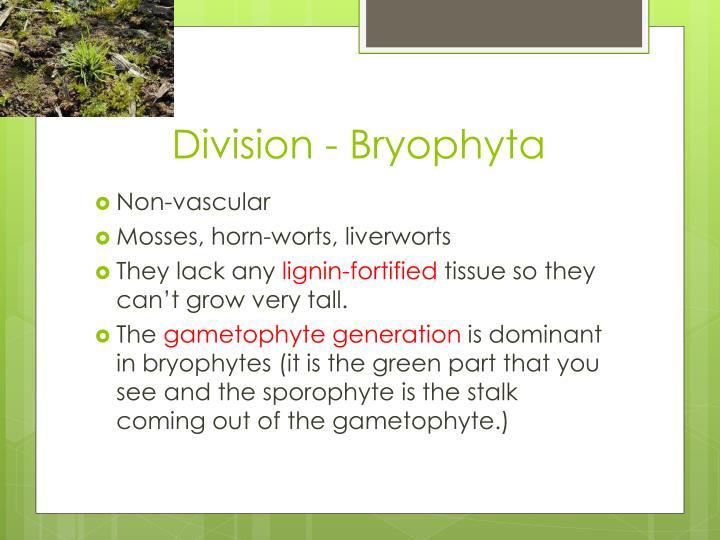 Division - Bryophyta